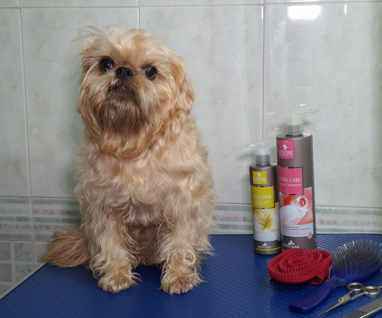 Tratamiento realizado a un perro con piel seca y dañada.