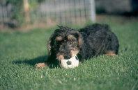 Jugar con tu perro, mucho más que un pasatiempo