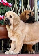 Avances en medicina veterinaria