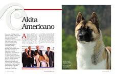 Akita Americano