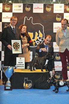 Bulldog Francés. IV Exposición Monográfica Nacional de la Asociación Española para el Fomento de la Raza del Bulldog Francés
