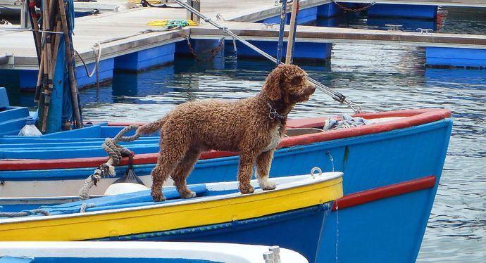 Perros de la mar