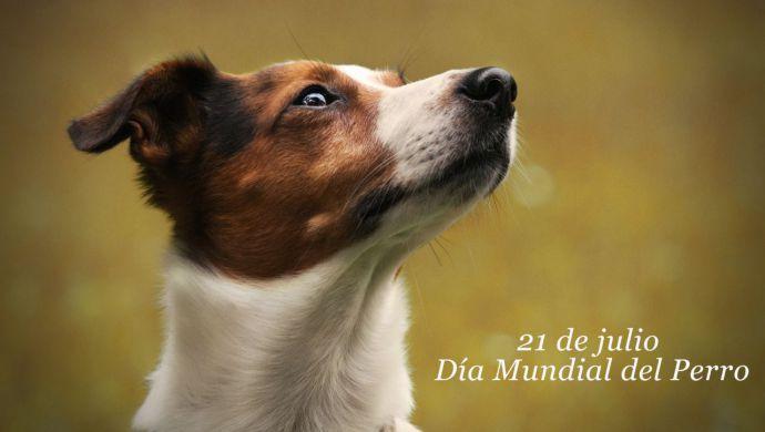 Las 5 claves del idioma de los perros