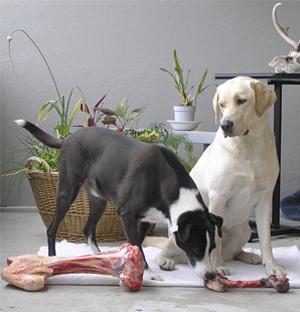 Una alternativa natural: la dieta BARF para perros