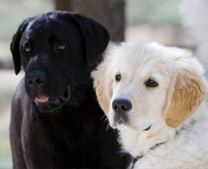 Análisis de la evolución del perro en la sociedad humana
