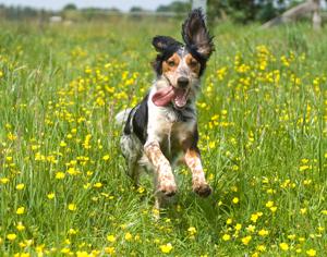 mejor prebióticos o probióticos en el alimento natural para perros y