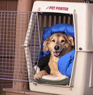 Transportines para perros: cómo viajar con tu mascota