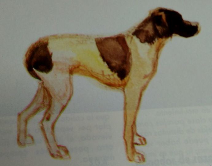 ¿Por qué cuando un perro está asustado mete la cola entre las patas?
