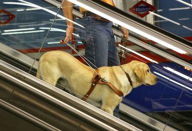 La ONCE condena la agresión a una mujer ciega al entrar con su perro guía en una tienda