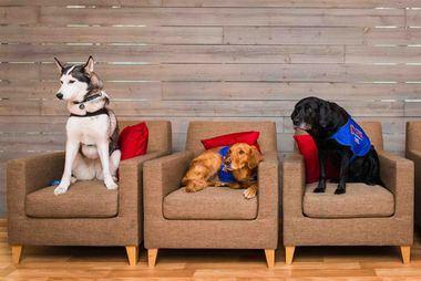 Expertos de todo el mundo piden mayor reconocimiento del papel de las mascotas en la sociedad
