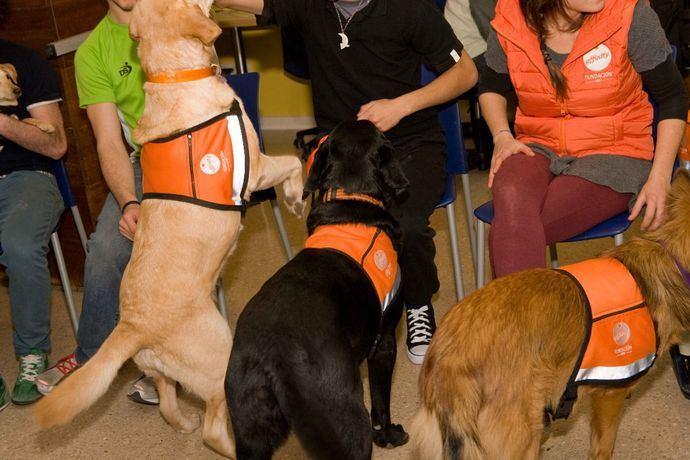 Fundación Affinity amplia las terapias con perros a 6 centros de menores tutelados