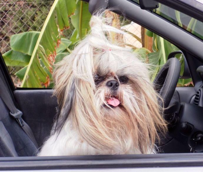 Mareo en el vehículo