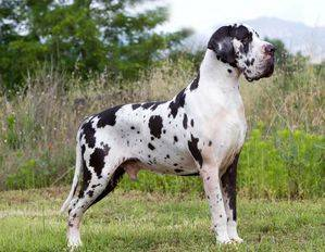 5 Pistas para adquirir tu cachorro directamente a un criador