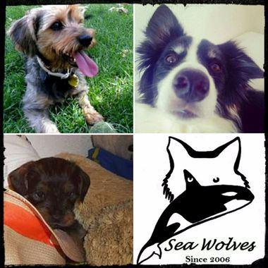 Curso de introducción a la etología y educación canina