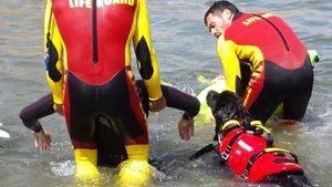 """Escuela cinológica salvamento acuático y rescate """"ECSAR"""""""
