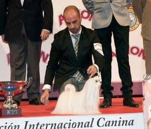 """El Bichón Maltés """"Cinecitta Ian Somerhalder"""" elegido mejor ejemplar de la 88º Exposición Internacional de Primavera"""