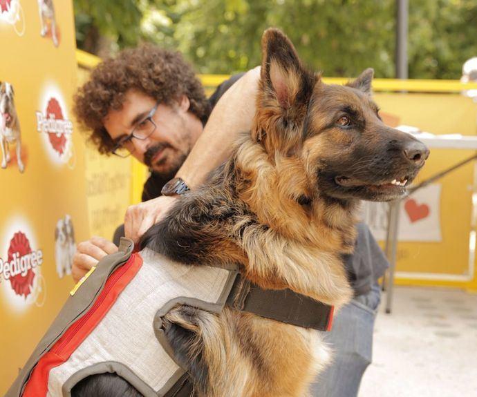 Pedigree ha presentado el primer dispositivo que interpreta los momentos de felicidad de los perros