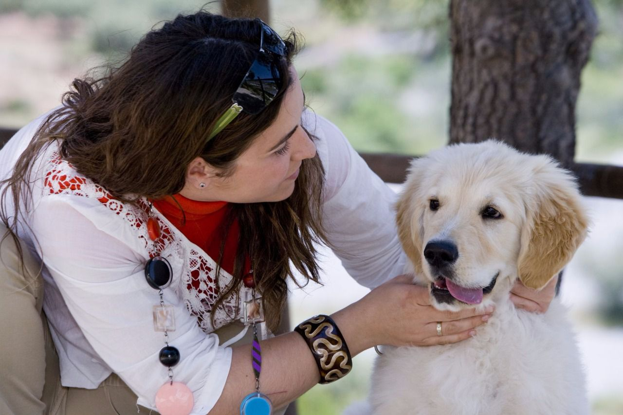 causas de micción frecuente y excremento en perros