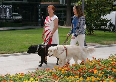 Los perros guía de la ONCE celebran 25 años al lado de los ciudadanos de Madrid
