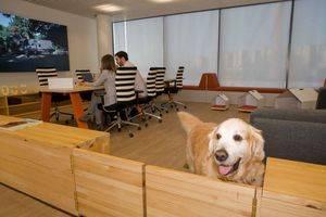 Affinity cumple su segundo a�o de mascotas en la oficina