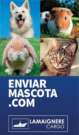 Accede a enviarmascota.com si necesitas transportar tu mascota al extranjero
