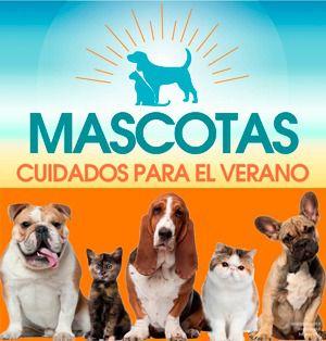 Cuidados de las mascotas durante el verano