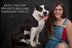 Fundación Tomillo & Thai: Stop Bulling