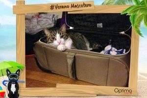 Participa en el concurso #VeranoMascotero de nuestros amigos de #Optimanova