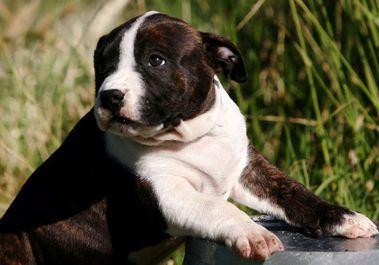 Protestas de los propietarios de perros potencialmente peligrosos