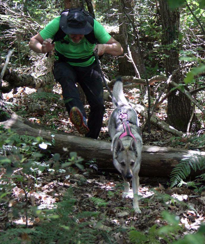Dogtrekking, un nuevo deporte canino outdoor, llega a España
