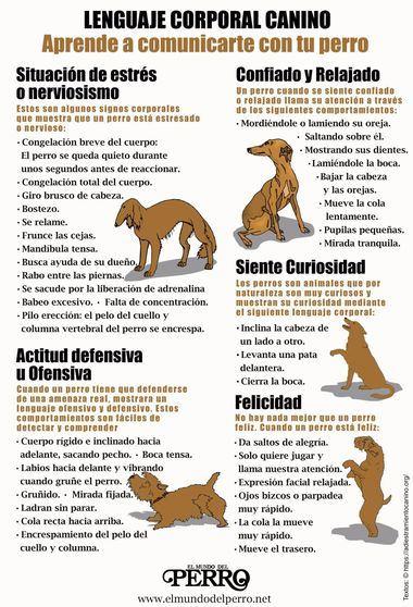 Lenguaje Corporal Canino. Aprende a comunicarte con tu perro.
