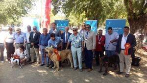 Un Mastín Español, un Ratonero Valenciano y un Dogo Canario, los mejores ejemplares de la Exposición Nacional de Razas Caninas Españolas
