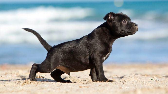 La orina canina, su lenguaje oloroso y el césped