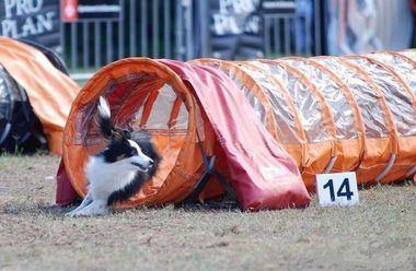 Cerca de 500 perros de 42 países participarán en el 21º Campeonato del Mundo de Agility