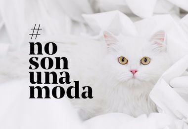 Fundación Affinity lanza la campaña #NoSonUnaModa contra el abandono de animales