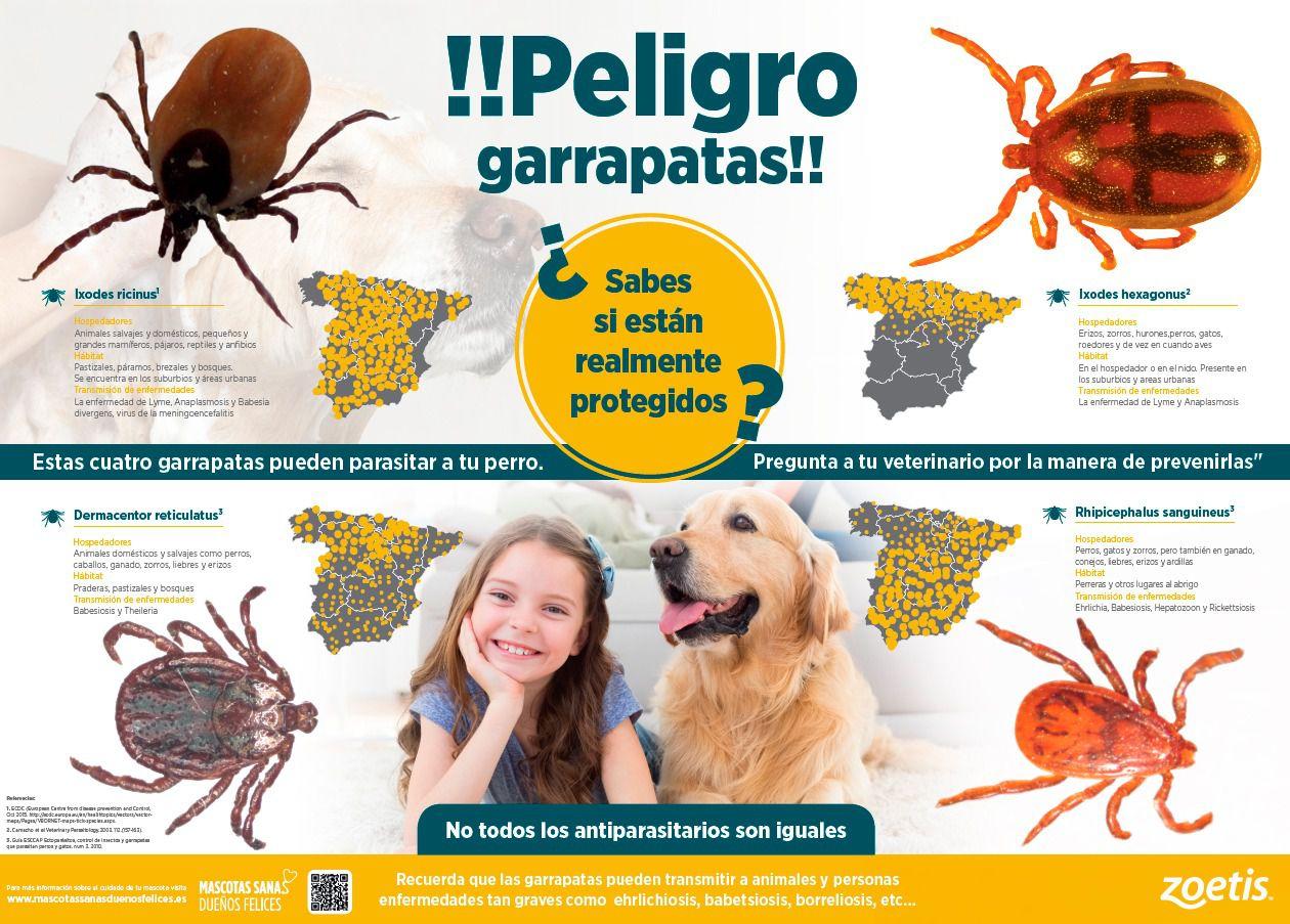 enfermedades que transmiten las garrapatas en los perros