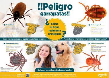 Las garrapatas de nuestros perros pueden transmitirnos graves enfermedades
