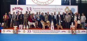 Mejores ejemplares de la 33º Exposición Internacional Canina de Otoño