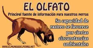 El olfato. Principal fuente de información para nuestros perros
