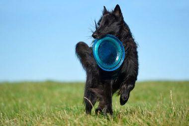 Cómo mantener a tu perro sano y en forma