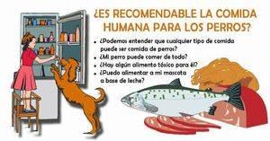¿Es recomendable la comida humana para los perros?