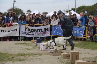 Frontline Tri Act patrocina el Dog Day