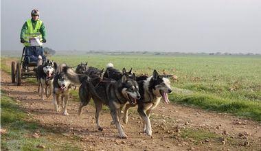 Empieza la XXV Travesía de Los Monegros con Perros de Tiro
