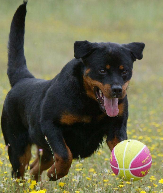 Foto: Alberto Nevado - El Mundo del Perro
