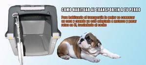 Como habituar al transportin a tu perro