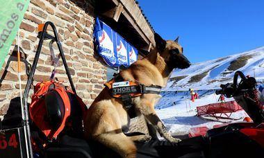 Tiendanimal colabora con Thor, el perro rescatador de Sierra Nevada