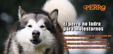 El perro no ladra para molestarnos. El significado de sus ladridos