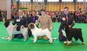 El perro de agua español del sevillano Salvador Cabrera, entre los ganadores de Crufts, la mayor exposición canina del mundo