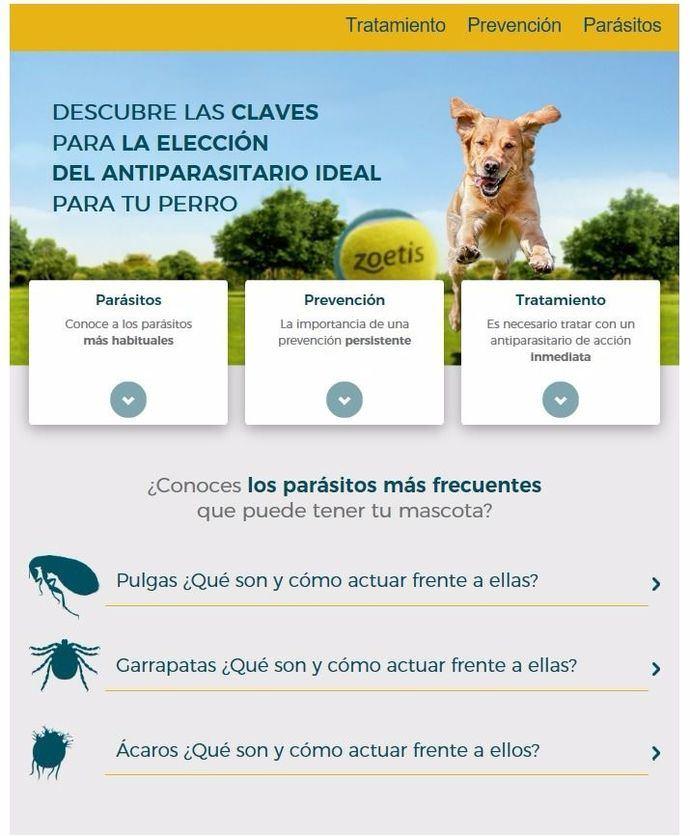 Nueva web informativa de Zoetis sobre parásitos en mascotas para el propietario