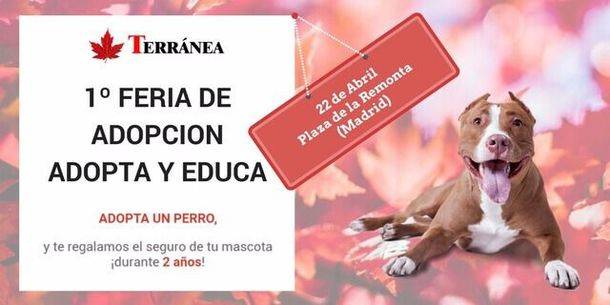 1ª Feria de adopción de perros y mercadillo solidario en Tetuán (Madrid)